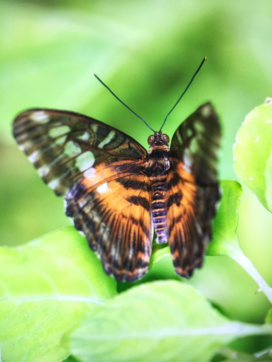 grungebutterfly