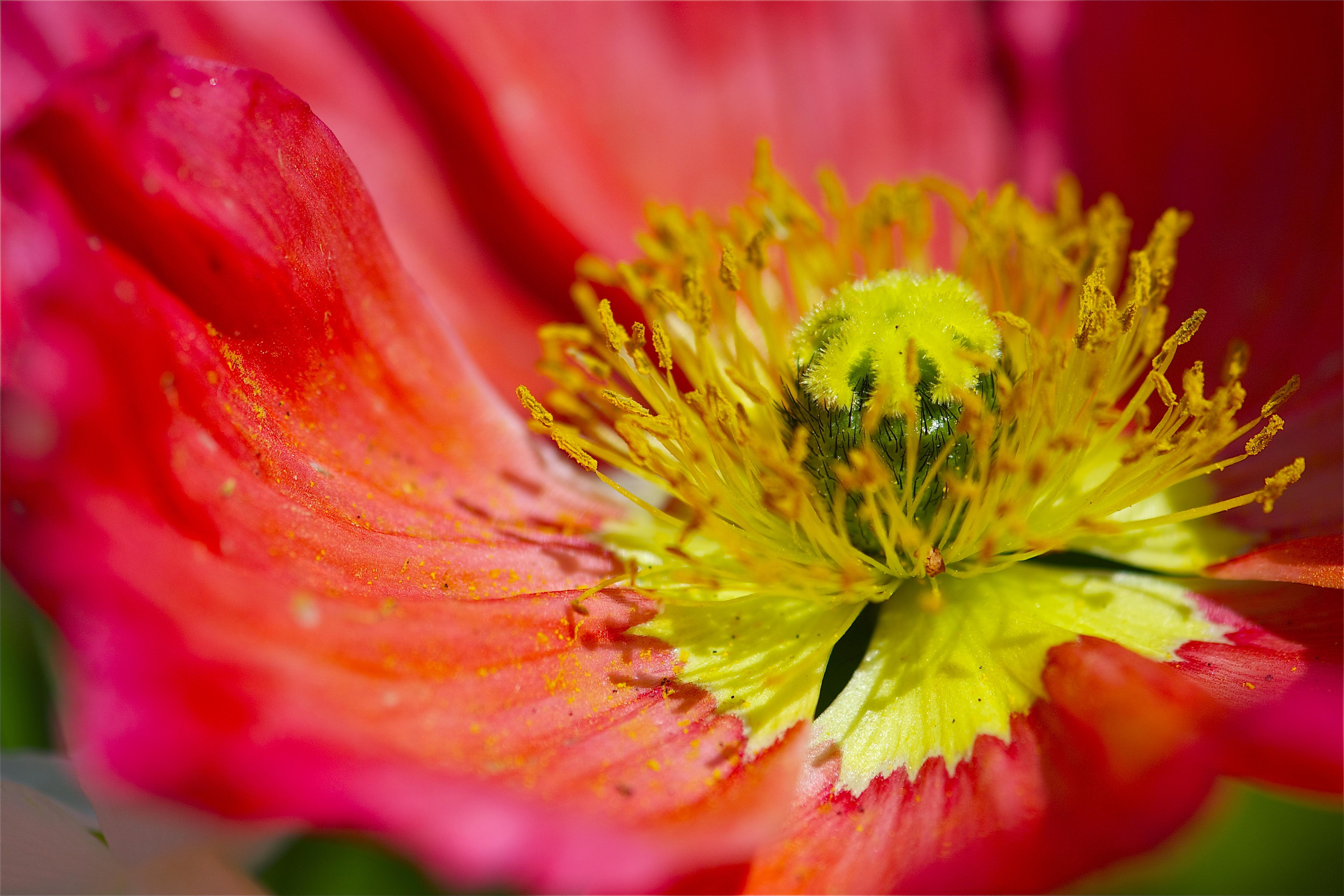 yellow stamen pops amp mojo photos