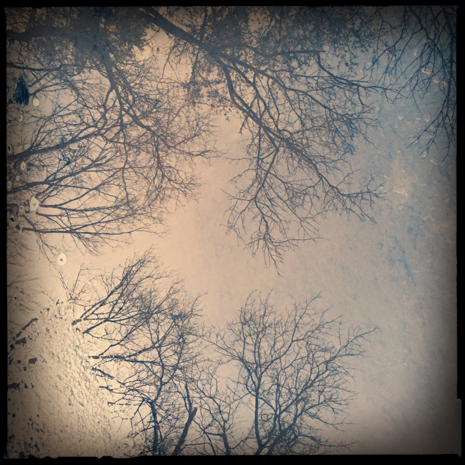 treereflection