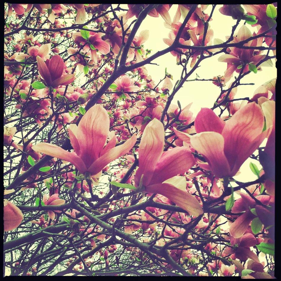 tuliptee